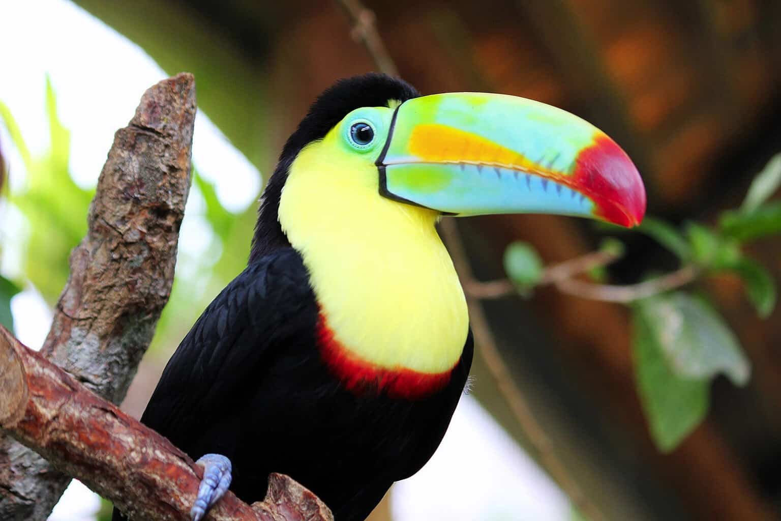 Costa-Rica-Wildlife-Toucan